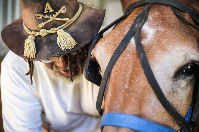 Paul Cook hooks up a mule to the wagon for Museum Day Saturday Sept. 1, 2018, at Fort Concho.