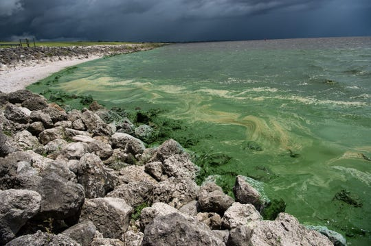 Algae is seen on the shores of Lake Okeechobee on Friday, June 29, 2018, as discharges continued from the lake. Scientists are currently debating the effects of spraying glyphosate herbicides on Lake Okeechobee to control invasive plants such as water hyacinth and water lettuce.