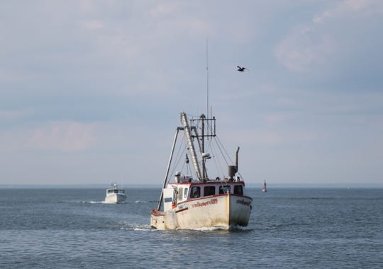 Scallop boat Rock n Roll II, captained by scallopman Chris Scola, returns from a day out on the water with his catch to Montauk on Tuesday, September 4, 2018.