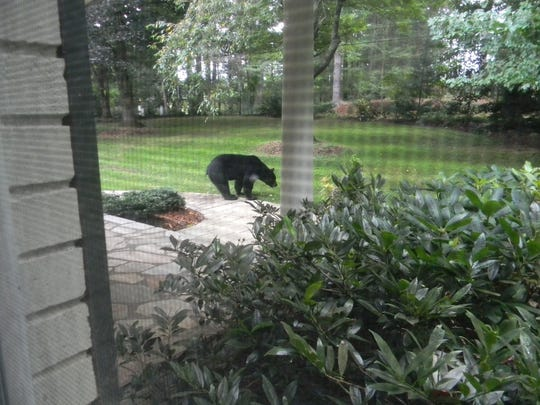Encounters with bears are becoming more common in WNC. This bear was spotted in a backyard recently in the Asheville area.