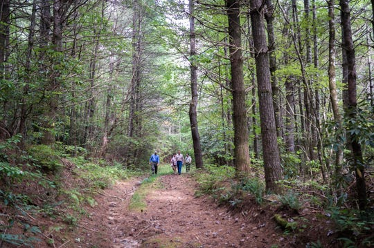 The trail leading to Gravely Mill Falls in the newly-opened Headwaters State Forest in Transylvania County.
