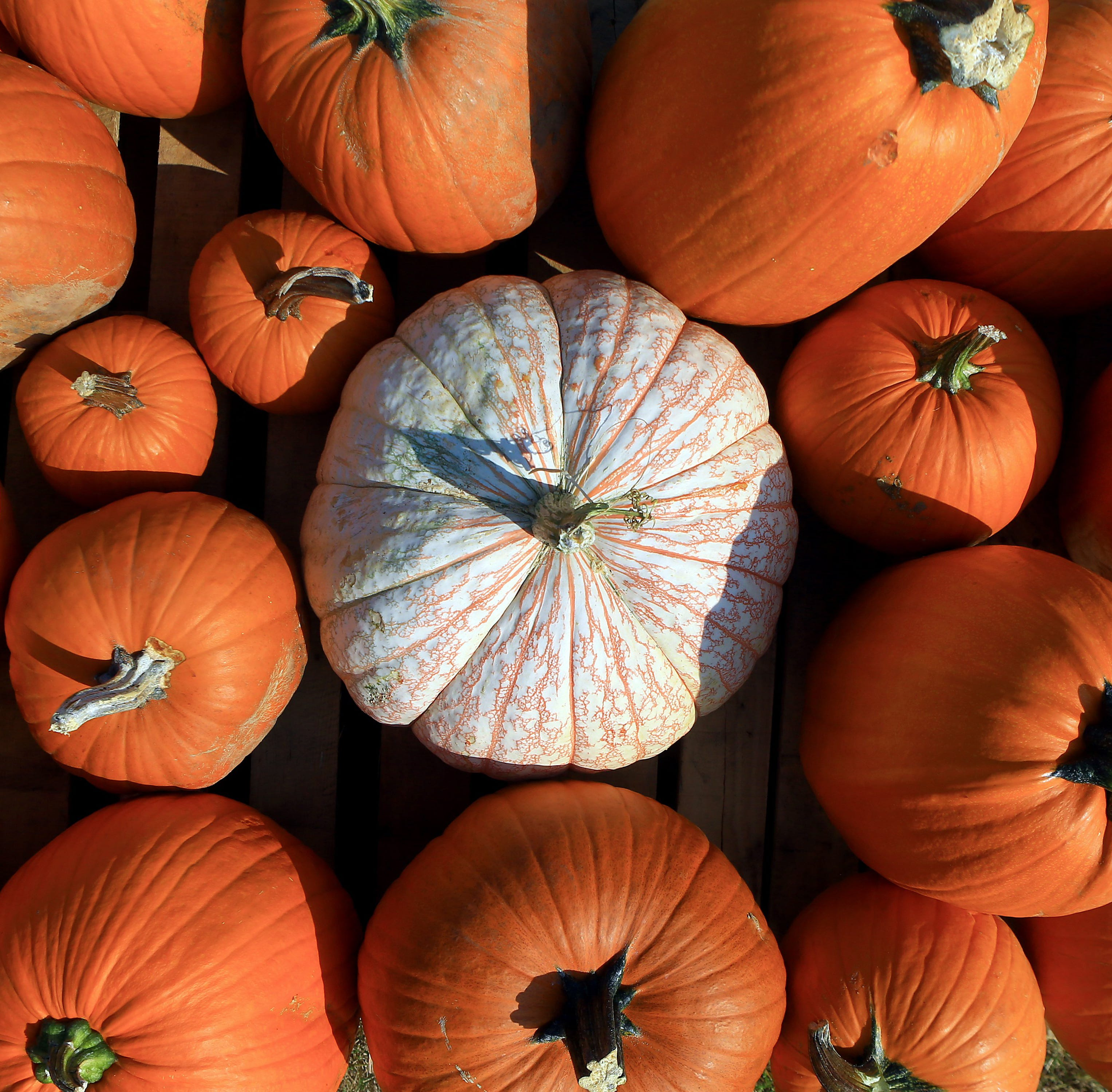Festivals, pumpkin patches, haunted houses and Halloween carnivals: It's time for fall fun in Corpus Christi.