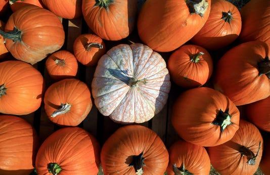 1003 Cclo Pumpkins02