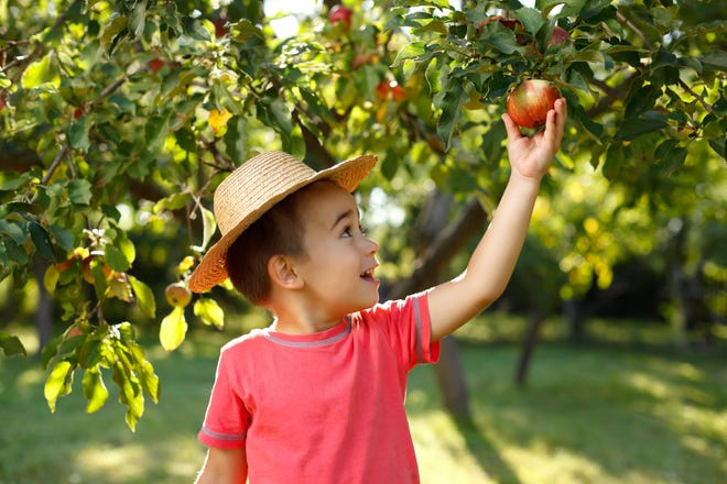 It's easier to get over the end of the summer when you plan a pick-your-own day at a farm or orchard.