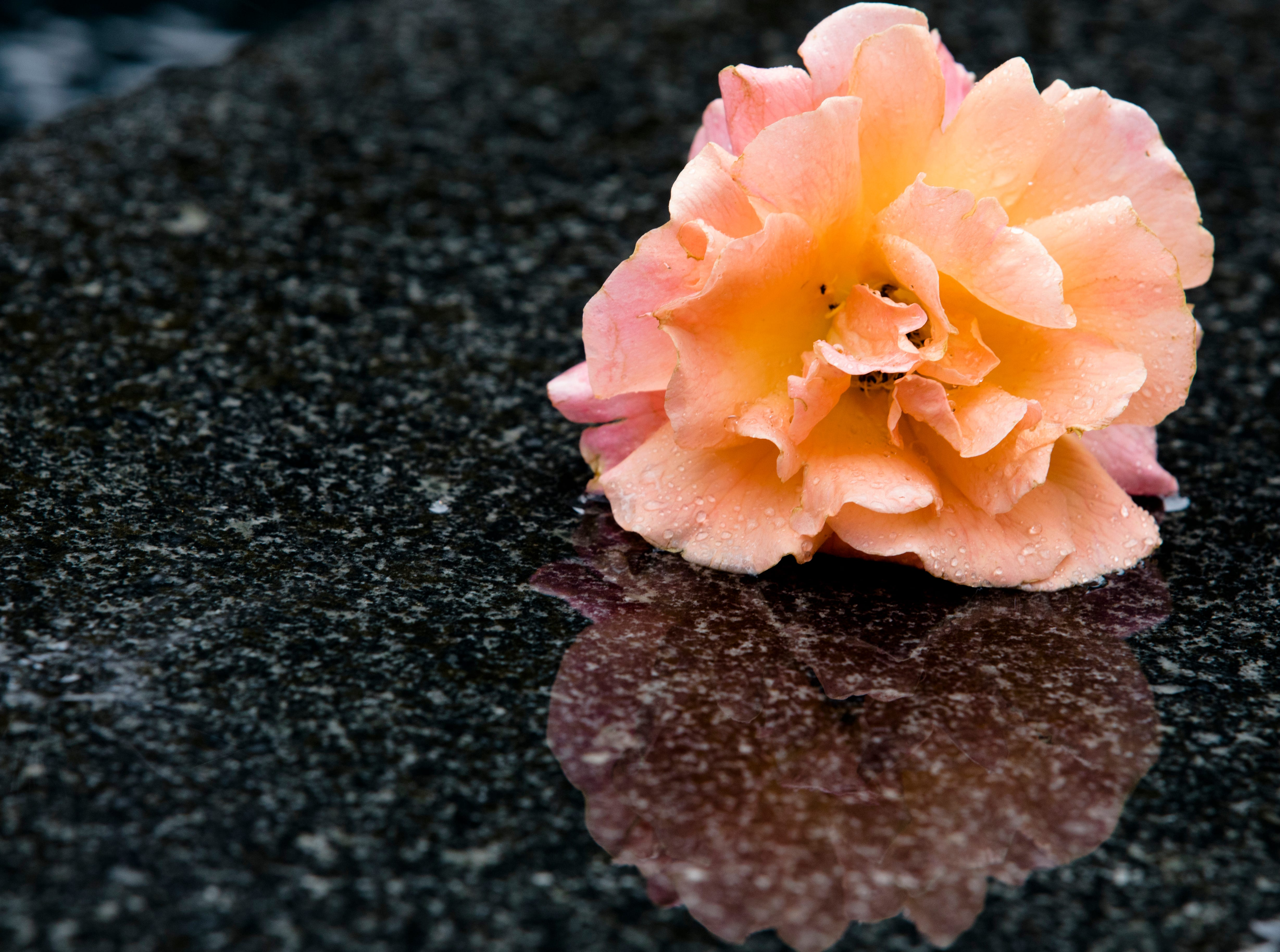 A flower left on Fountain Square in Downtown Cincinnati on Friday, Sept. 7, 2018. Omar Santa Perez killed three people on Thursday.