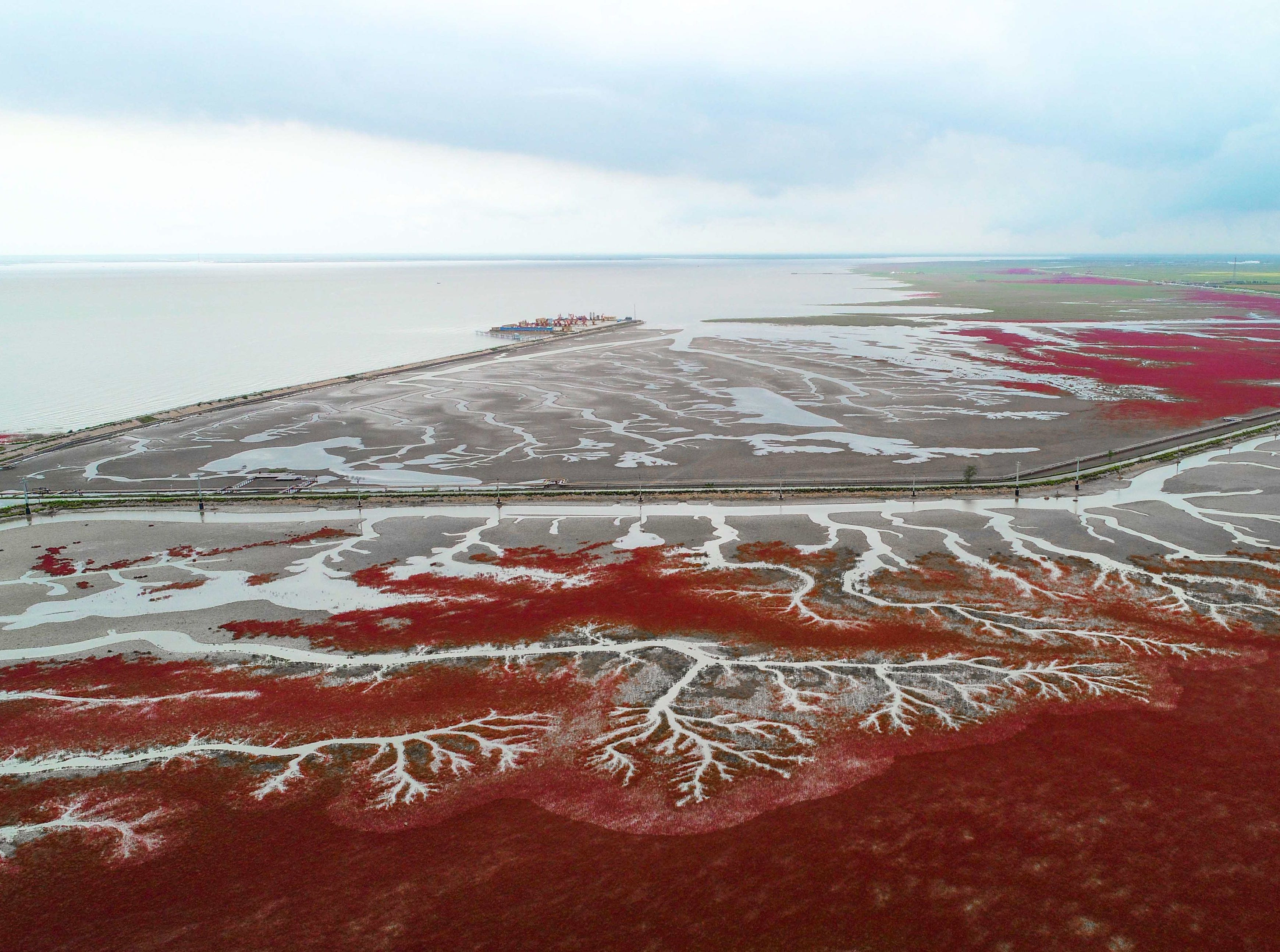 The Red Beach in Panjin in China's northeastern Liaoning province. The beach gets its name from its appearance, which is caused by a type of sea weed that flourishes in the saline-alkali soil.