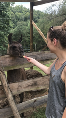 Andrea Breunlin feeds part of a graham cracker to a llama while visiting Smoky Mountain Llama Treks.