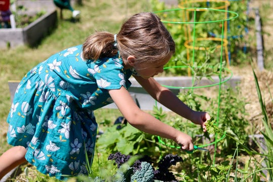 One way kids can volunteer is by gardening and harvesting produce to donate to food pantries.