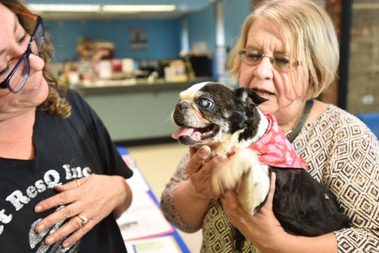 Robyn Urman, Pet ResQ founder looks at Bruna, the Boston Terrier senior dog, which earlier this week was thrown out of a car on Industrial Ave in Teterboro, hold by Debbie Yankow, Bergen County Animal Shelter director.