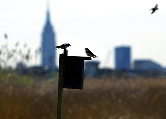 Meadowlands bird