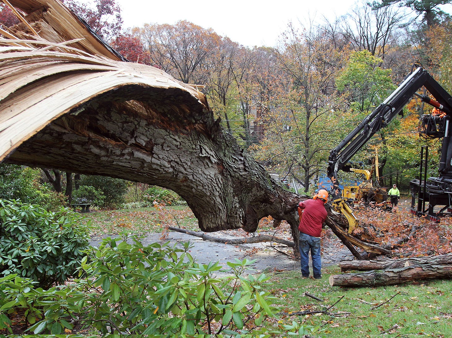 A worker from Dave's Tree Service cuts a fallen tree in Ridgewood following Hurricane Sandy in New Jersey.