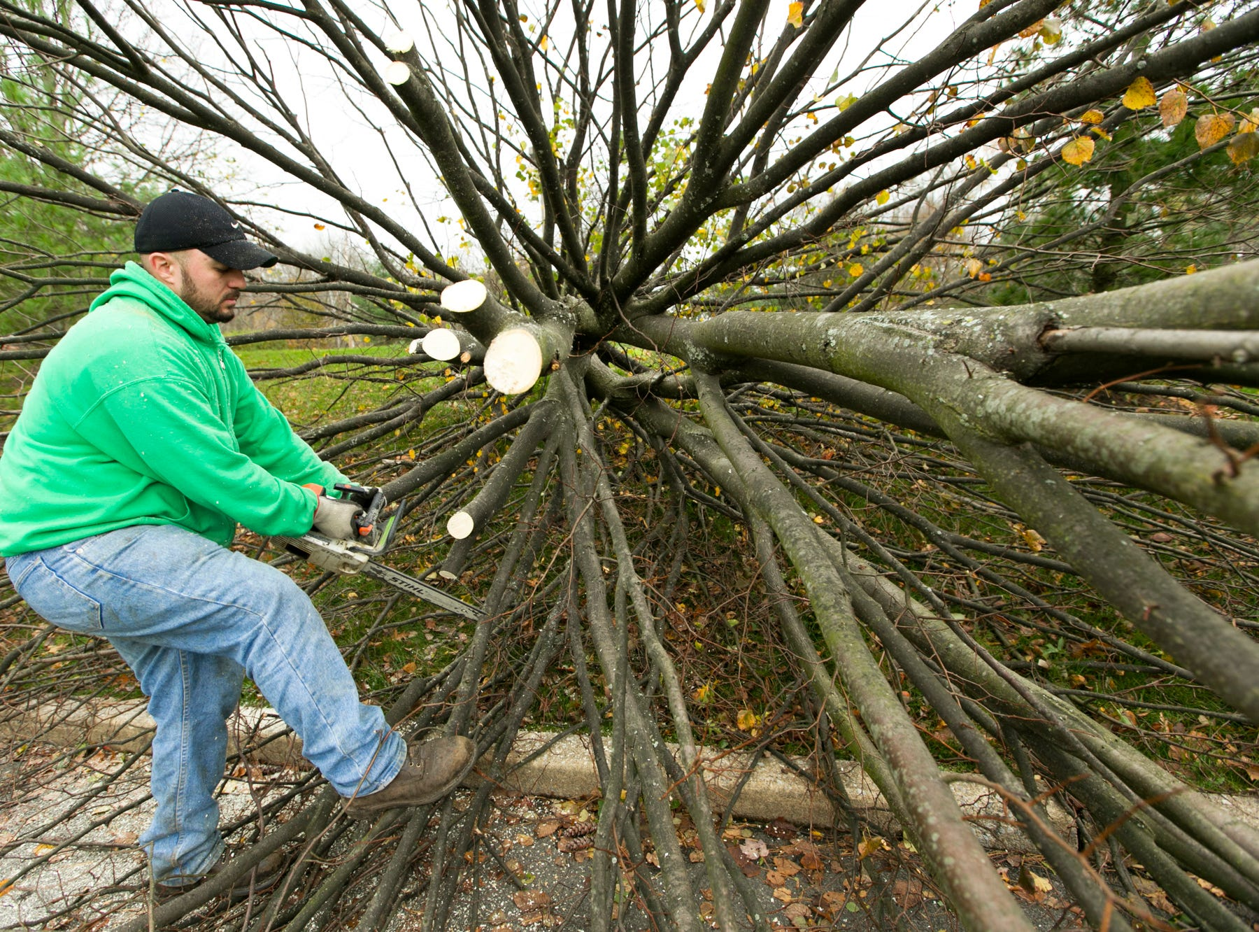 Sizar Barshani, a technician with Green Garden Landscaping Brothers, cuts up a fallen tree on Campus Drive in Totowa, a day and a half after Hurricane Sandy blew through.