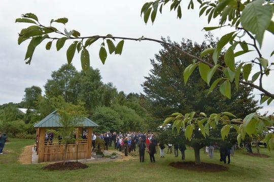 The pavilion in the Sakura Garden, seen through the leaves of a Yoshino Cherry Tree.