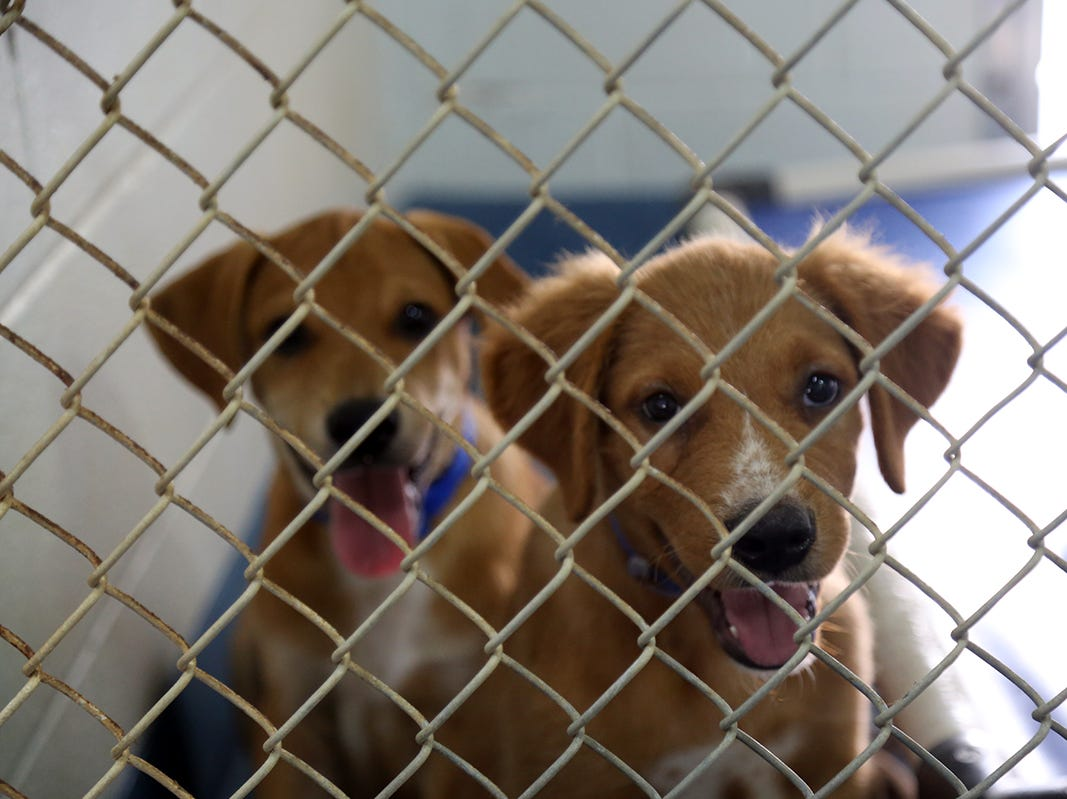 The Escambia County Animal Shelter reports that its adoption, transfer and foster rates are soaring this summer.
