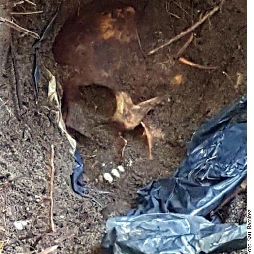 Hallan en Veracruz restos de, al menos, 166 personas