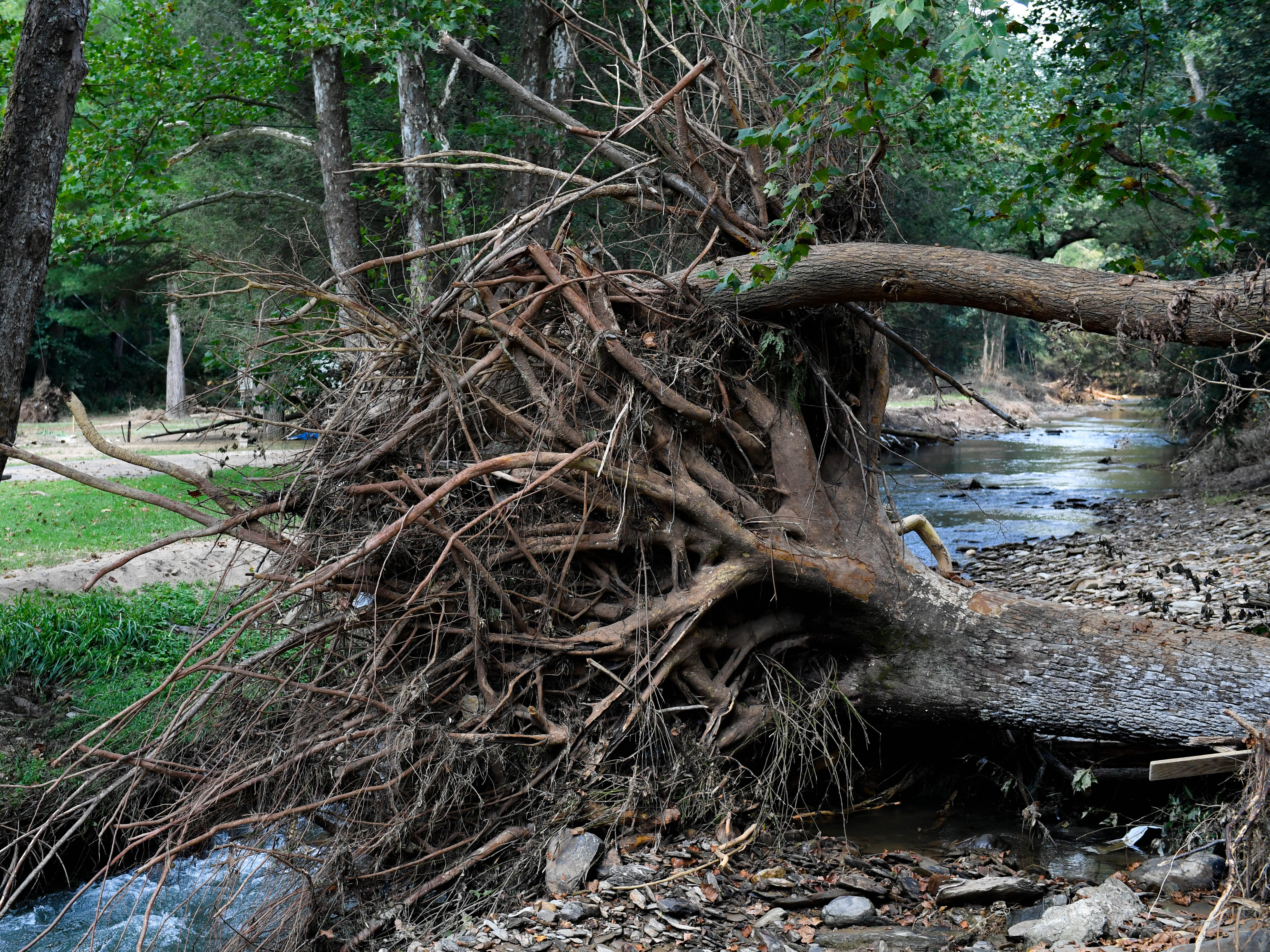 Not even trees with the deepest of roots were safe from the flood.