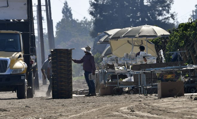 In this 2018 file photo, farm laborers box grapes at a vineyard along Lovers Lane in Tulare County. A recent study found Visalia has the 9th largest minority wage gap of all midsize U.S. metro areas.