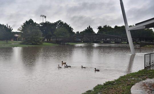 Ducks at Sikes Lake