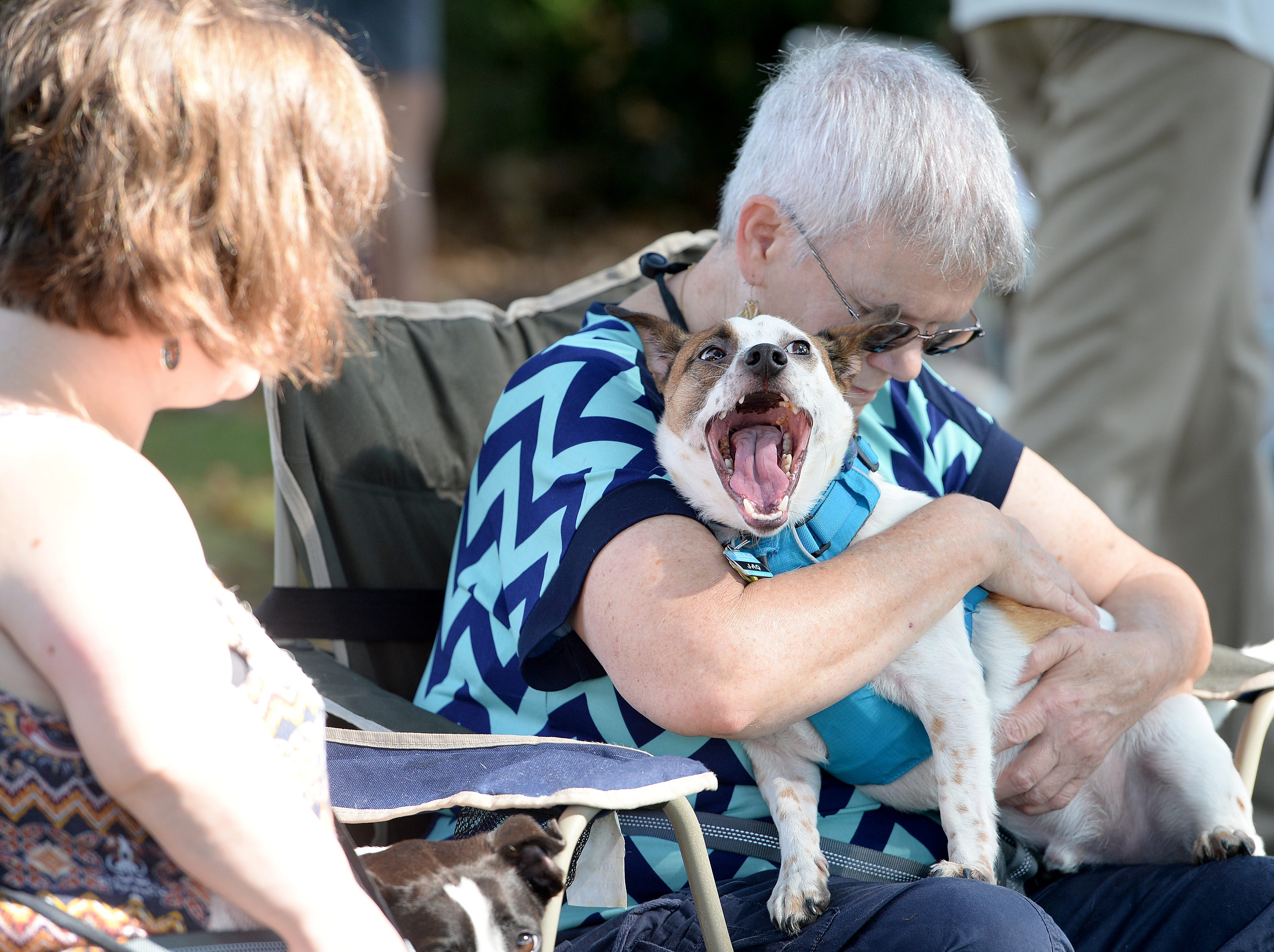 Carolyn Wilson, with her dog, Gus, bows her head in prayer during the 10th Annual Blessing of the Pets at Mills River Presbyterian Church on Sept. 8, 2018.