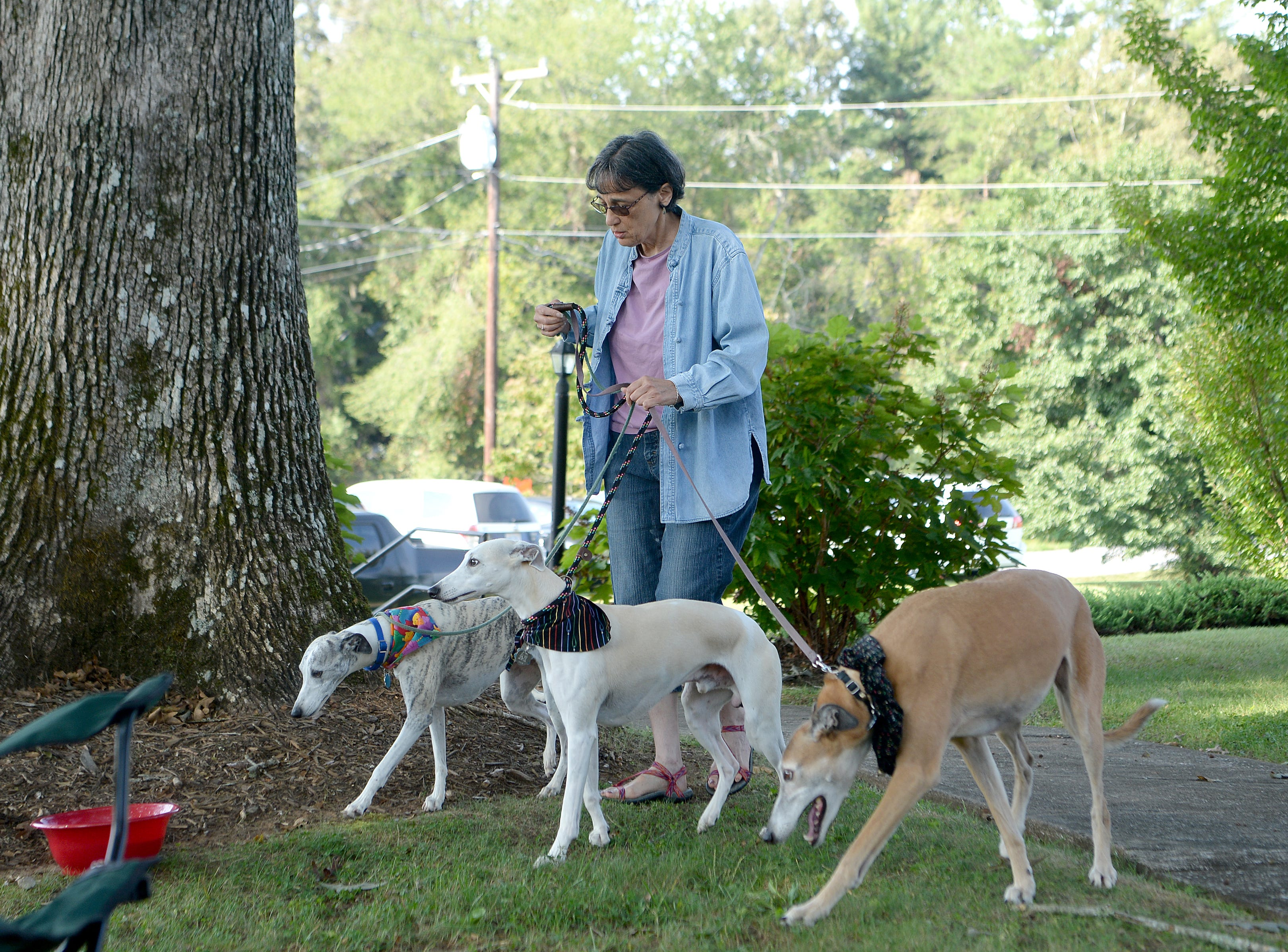 Terry Bentcover arrives with her whippets Talley, left, and Sunny, center, and greyhound, Ren, right, for the 10th Annual Blessing of the Pets at Mills River Presbyterian Church on Sept. 8, 2018.