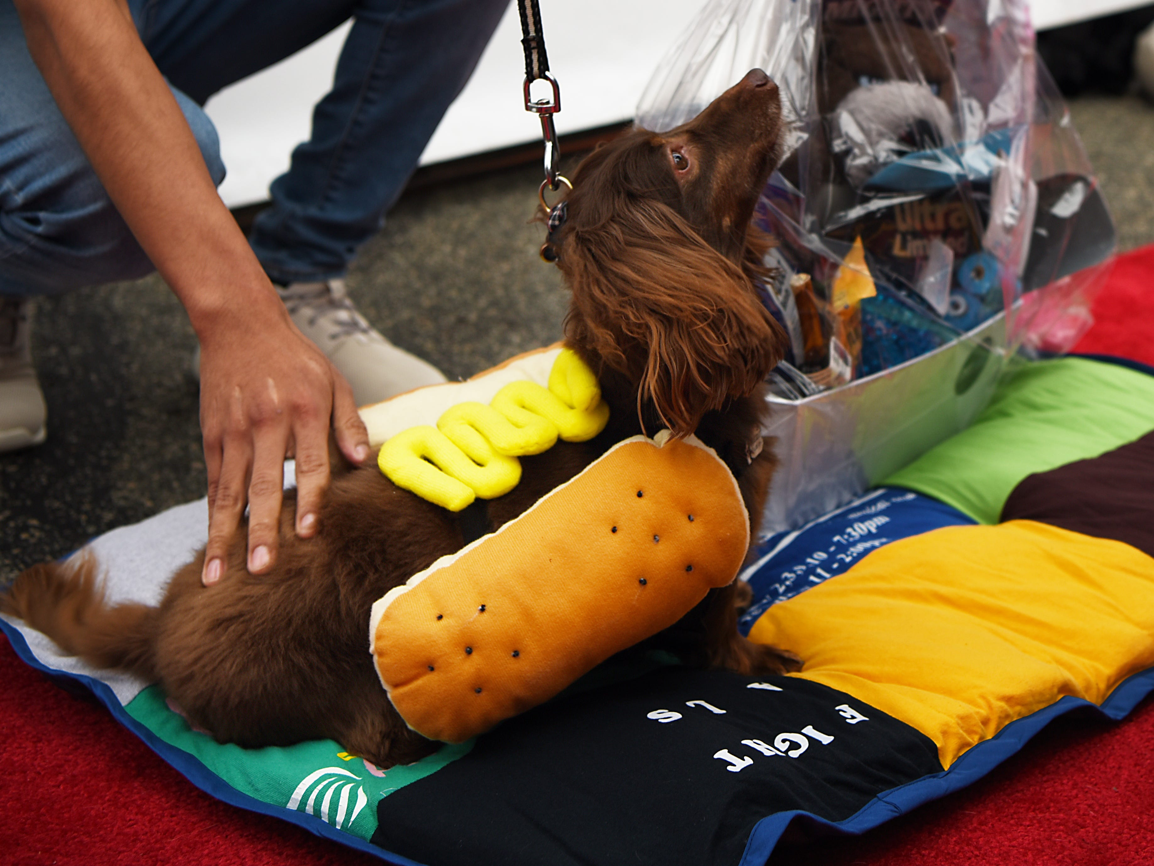 A Wiener dog dressed as a Wiener wins a prize at Woofstock 2018, a benefit for Bergen County animal rescue organizations, at City Place in Edgewater on Saturday September 8, 2018.