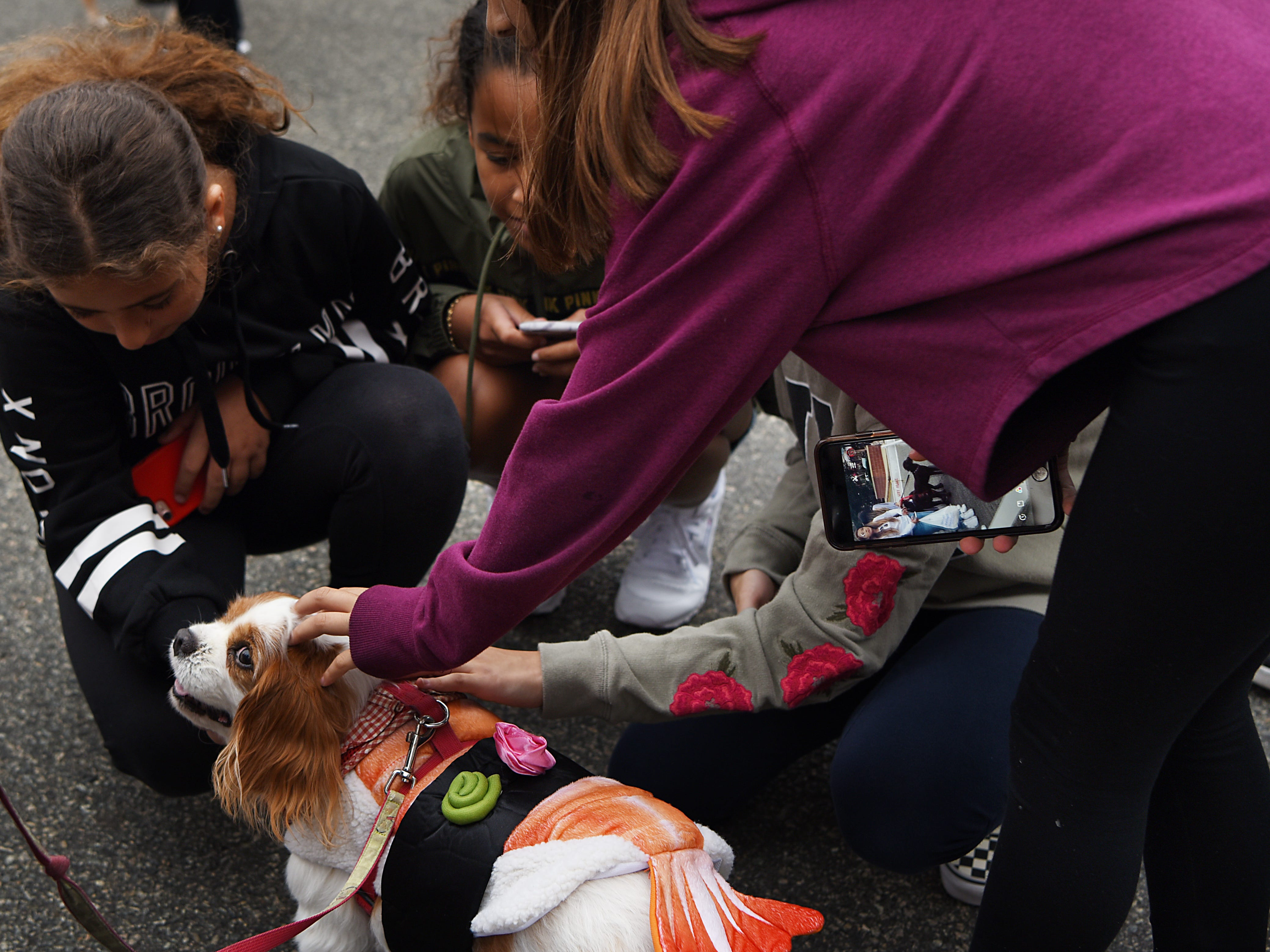 Coco Puff, a ten year old Cavalier King Charles Spaniel from Guttenberg, gets a lot of attention in her sushi costume.  Woofstock 2018, a benefit for Bergen County animal rescue organizations, at City Place in Edgewater on Saturday September 8, 2018.