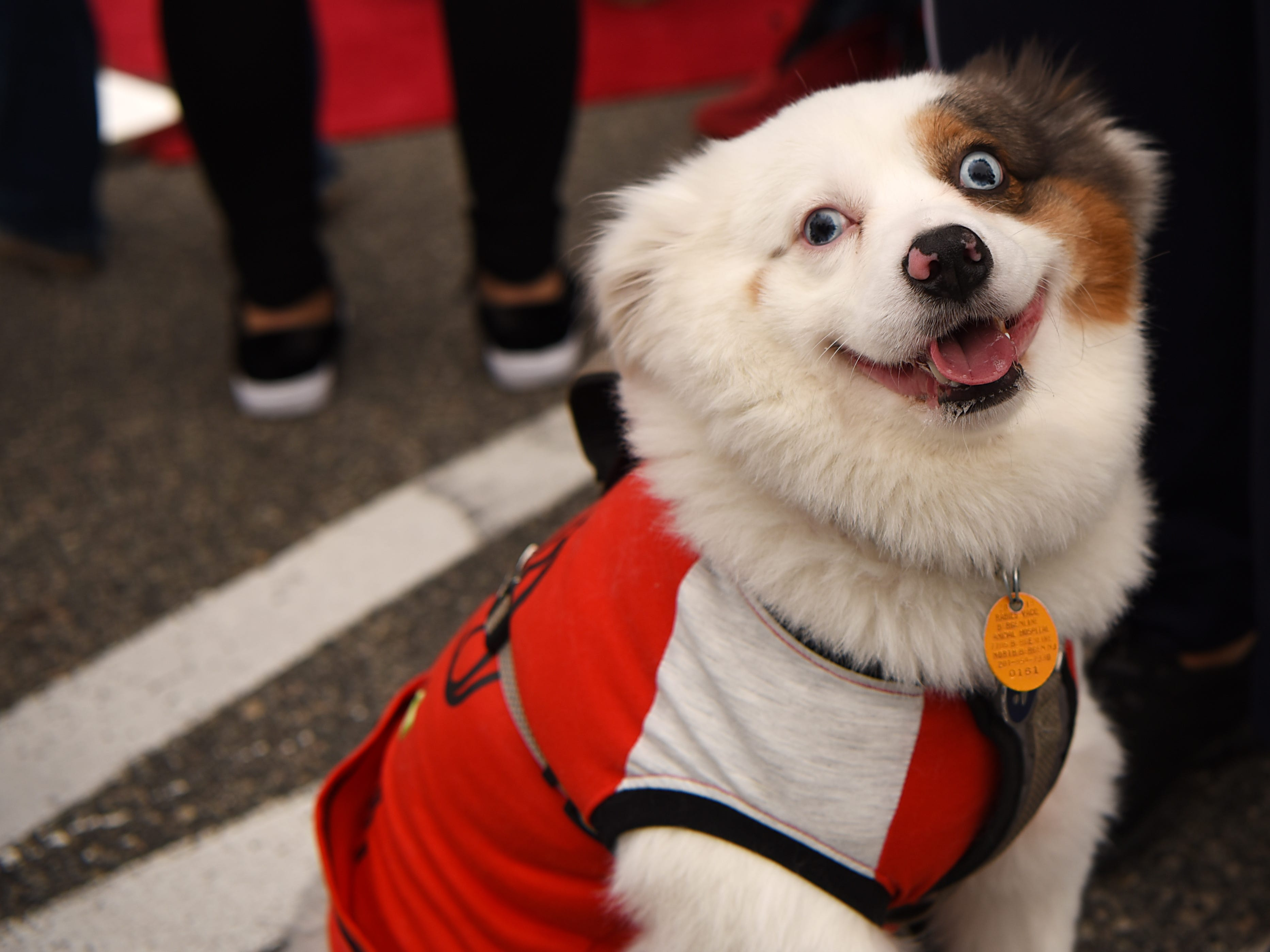 Coqueto, a one year old from West New York, smiles for the camera during Woofstock 2018, a benefit for Bergen County animal rescue organizations, at City Place in Edgewater on Saturday September 8, 2018.