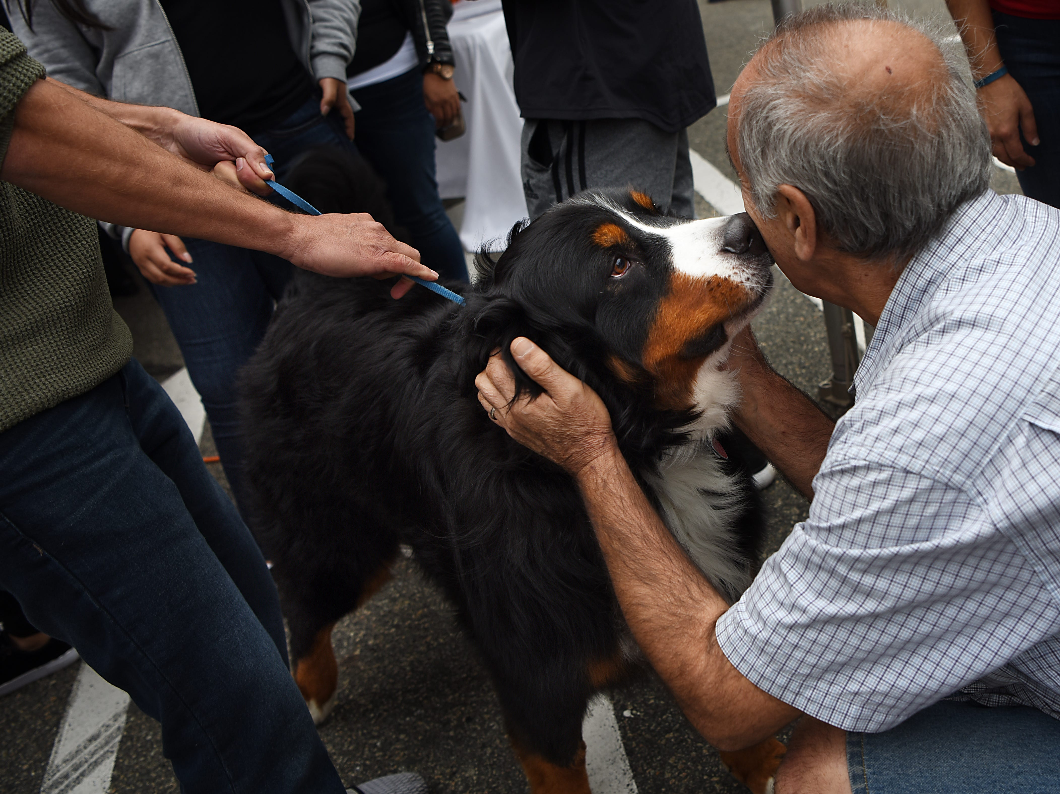 Luka, a three year old Bernese Mountain Dog from Tenafly, greets a stranger during Woofstock 2018, a benefit for Bergen County animal rescue organizations, at City Place in Edgewater on Saturday September 8, 2018.