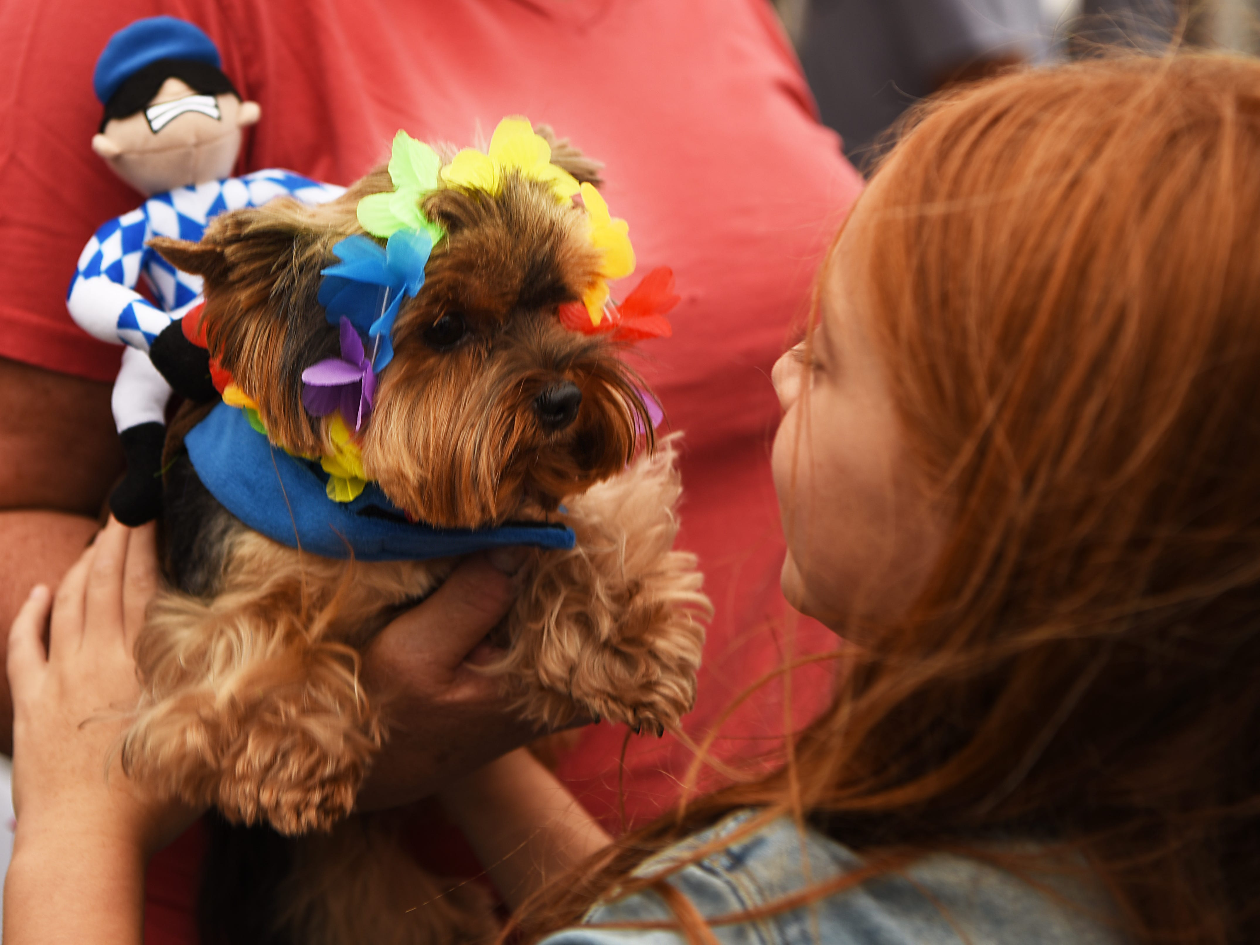 Angelina, a two year old Yorkie from west New York wears a costume with a jockey on her back, and is greeted by Emma Appel, six years old from Edgewater. Woofstock 2018, a benefit for Bergen County animal rescue organizations, at City Place in Edgewater on Saturday September 8, 2018.