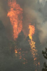 The Delta Fire torches trees on Sept. 7, 2018 north of Redding. (Hung T. Vu/Special to the Record Searchlight)