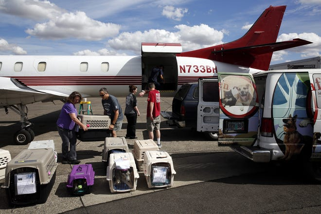 Volunteers working with Fetch Fido a Flight unload dogs that arrived from Oklahoma at McNary Field in Salem, Oregon, on Saturday, Sept. 8, 2018.