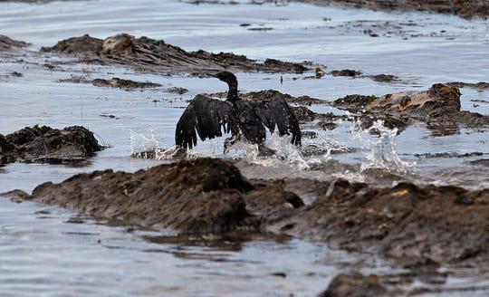 In this May 21, 2015, file photo, an oil-covered bird flaps its wings amid at Refugio State Beach, north of Goleta.
