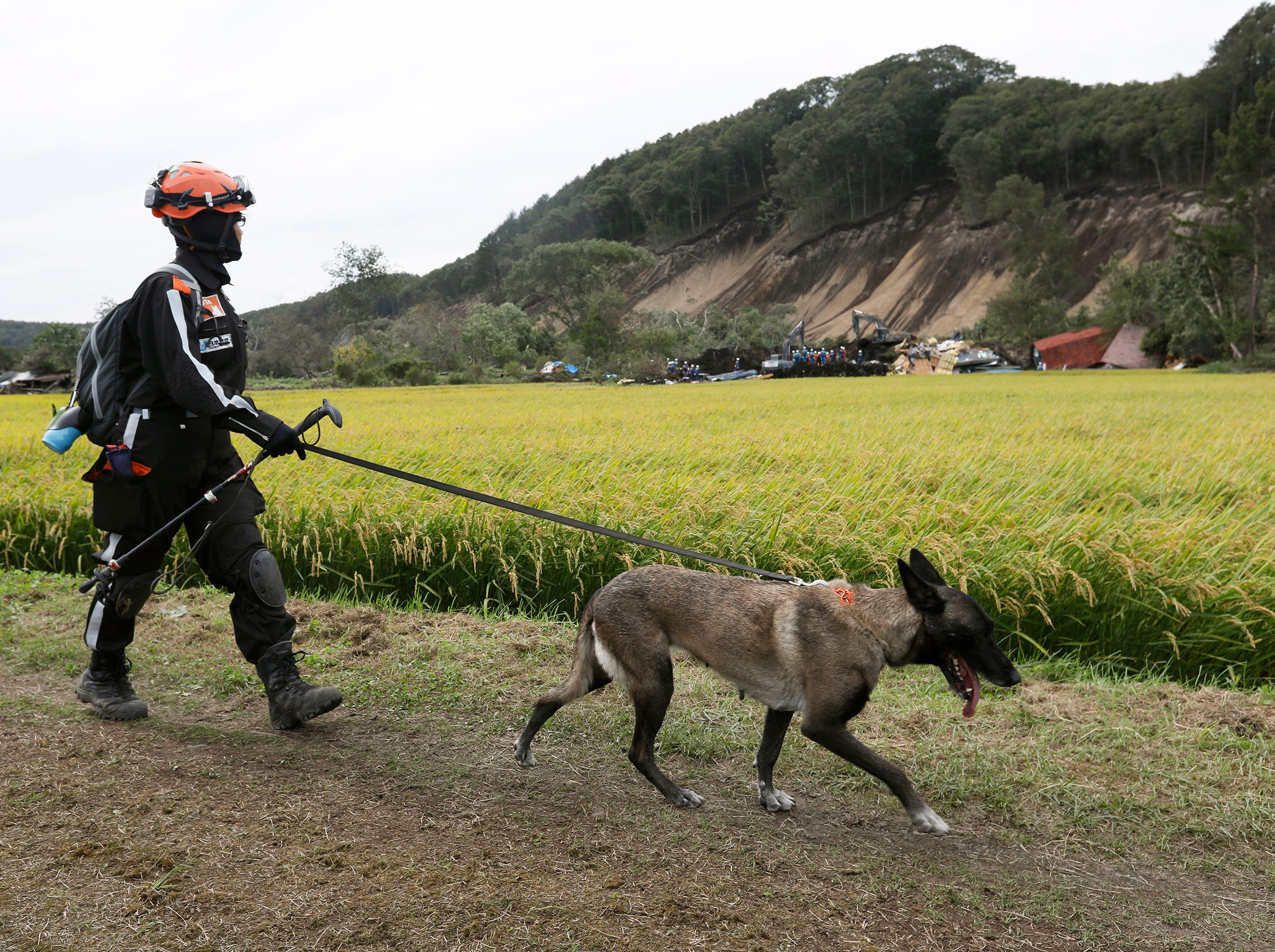 A rescue member with dog are seen as rescue operations (rear) continue at large landslide site in the Yoshino district of Atsuma, an area that was hit by a powerful earthquake, in Hokkaido, Japan. Japanese Prime Minister Shinzo Abe ordered to dispatch 25,000 personnel of Japan's Self-Defense Forces (JSDF) to earthquake-hit areas.