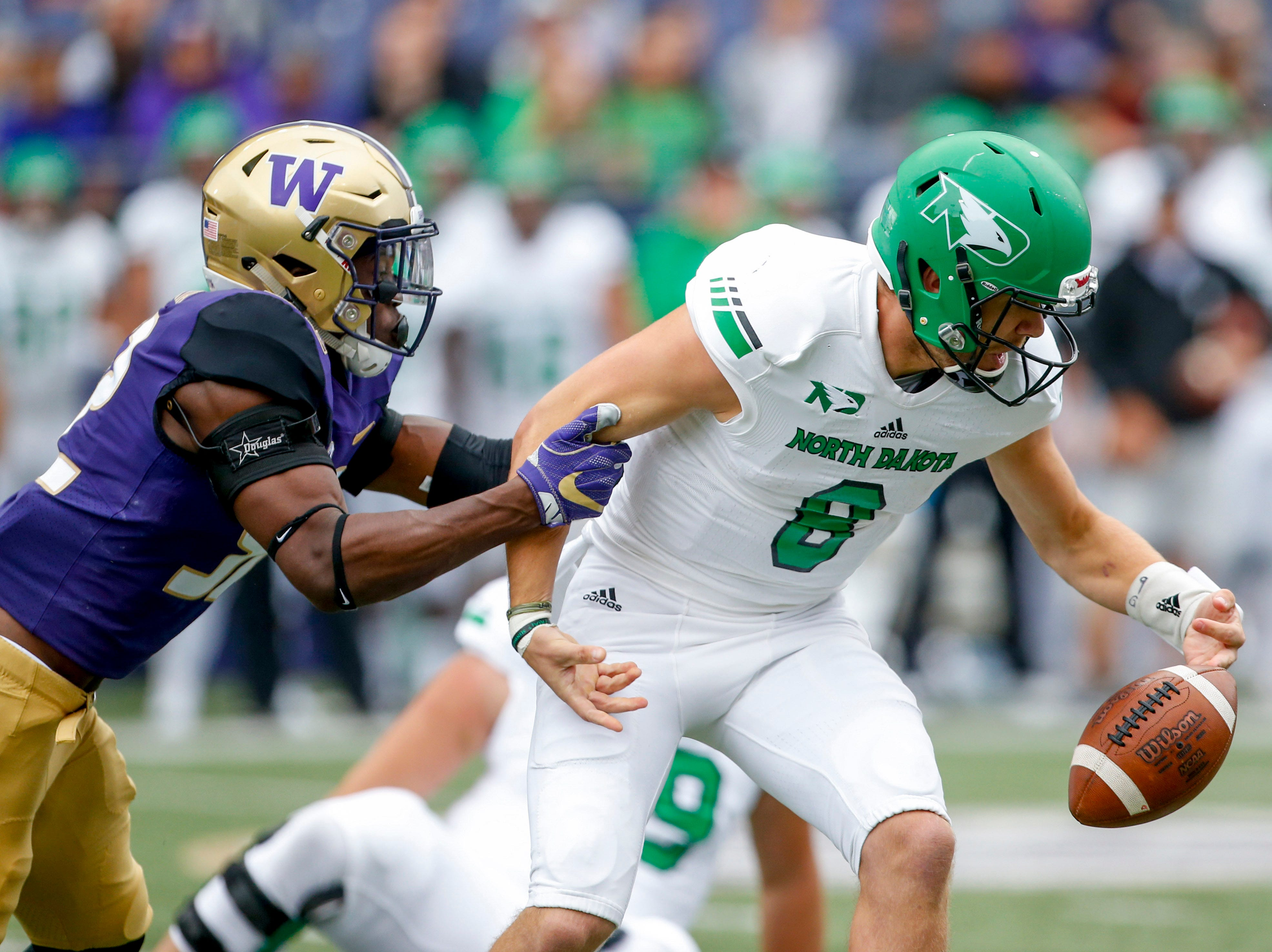 Washington Huskies linebacker Ariel Ngata (52) forces a fumble by North Dakota Fighting Hawks quarterback Nate Ketteringham (8) during the first quarter at Husky Stadium.