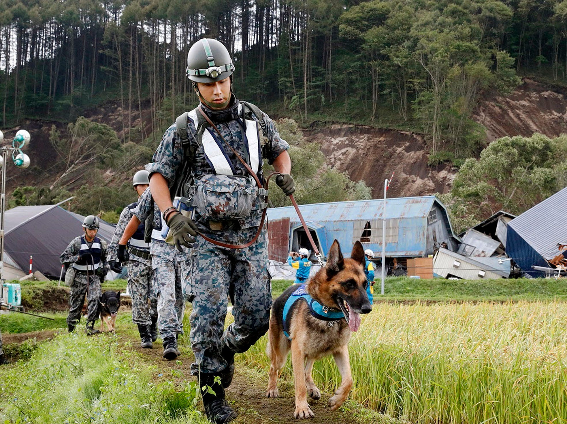 Japan Ground Self-Defense Force personnel with police dogs prepare to search for missing persons at the site of a landslide triggered by a powerful earthquake in Atsuma town, Hokkaido, northern Japan on Friday. A powerful earthquake Sept. 6,  triggered dozens of landslides that crushed houses under torrents of dirt, rocks and timber, prompting frantic efforts to unearth any survivors.
