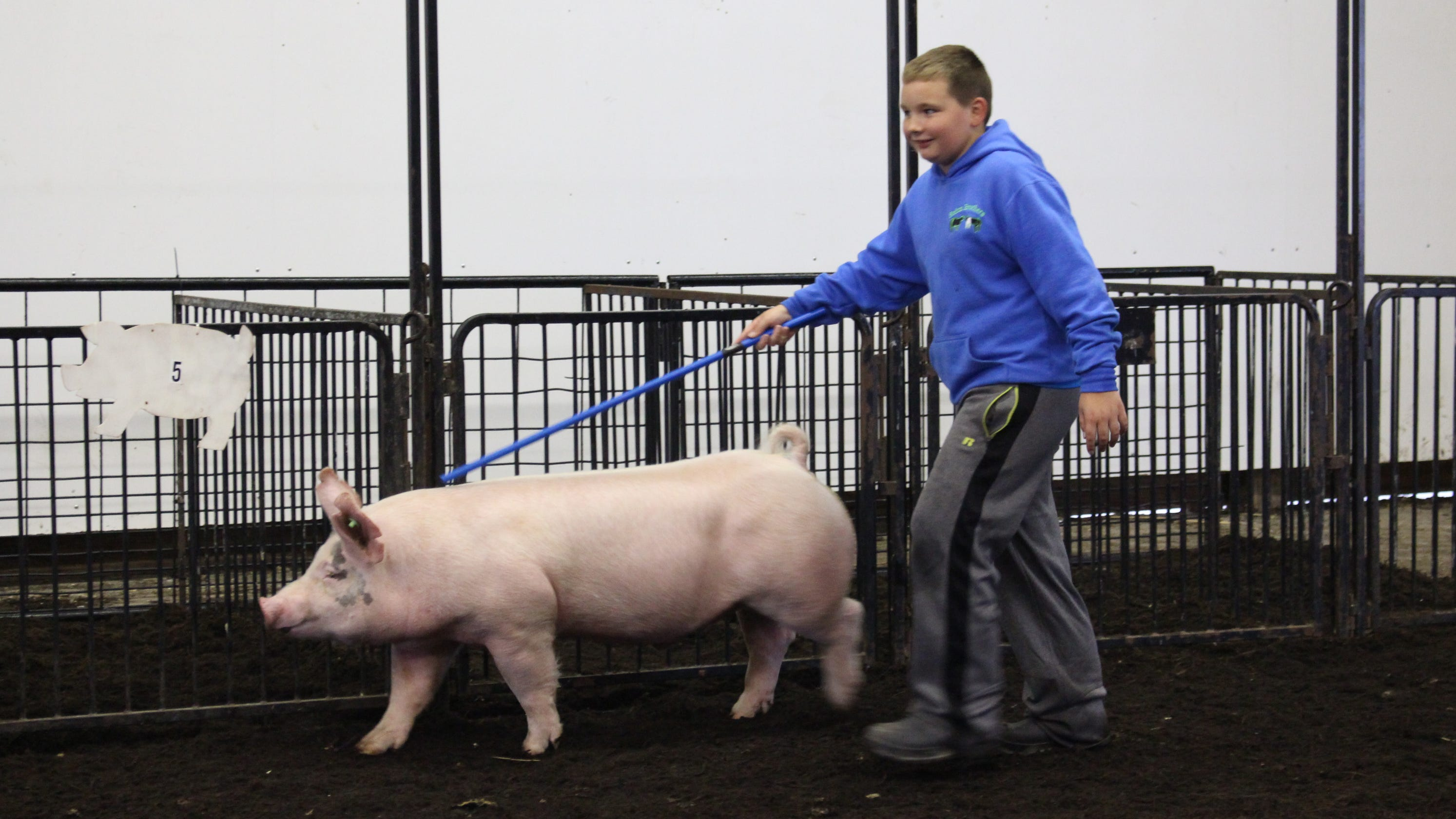 Fairgrounds welcome 375 Wayne County hogs after fear of flooding