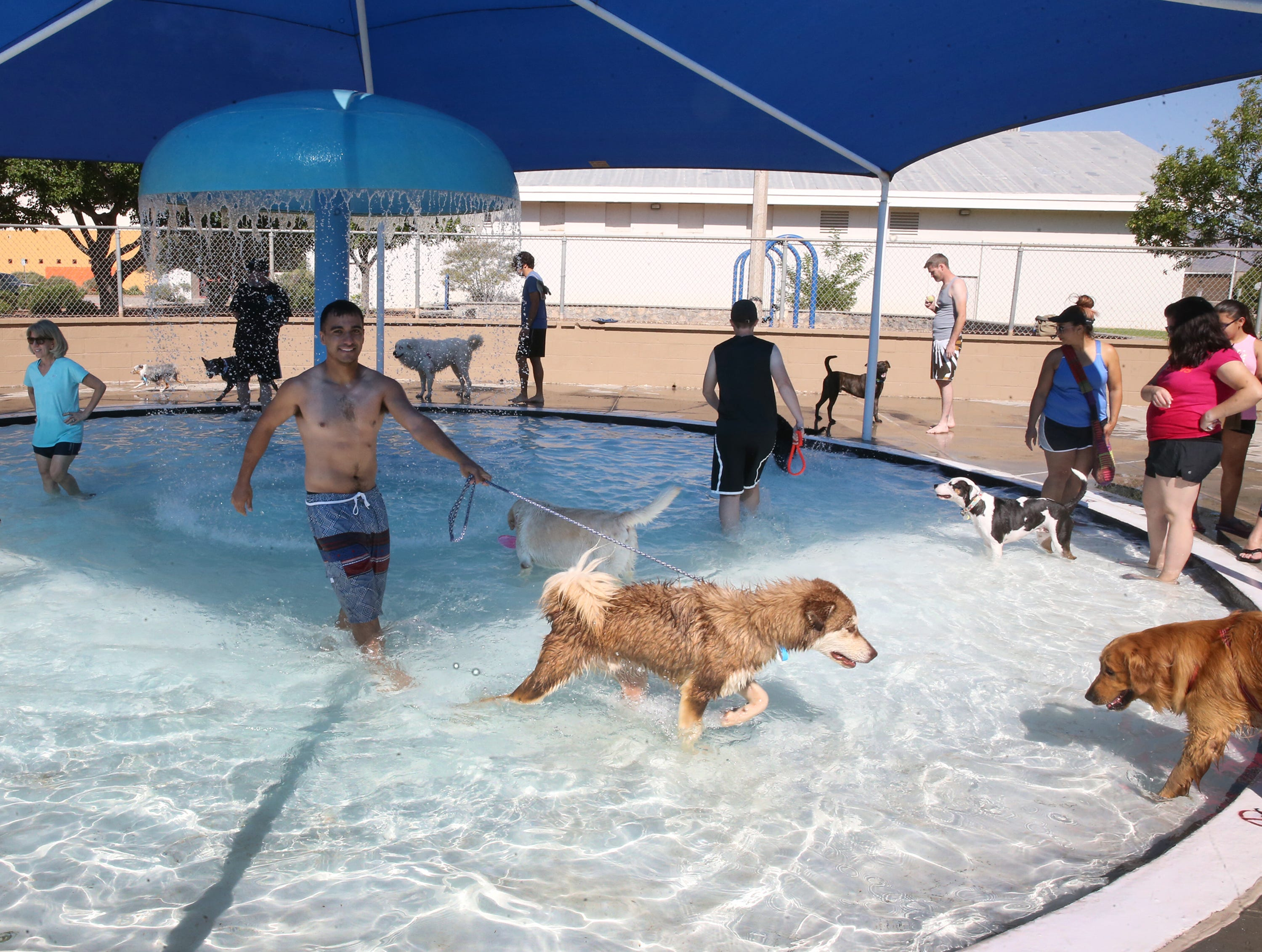 Dogs wading in a shallow pool Sunday.