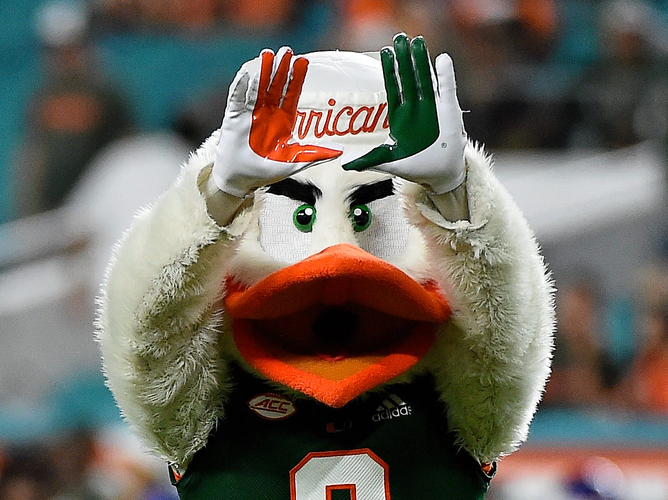 Week 2: Miami Hurricanes mascot Sebastian celebrates after a touchdown against the Savannah State Tigers during the second half at Hard Rock Stadium.