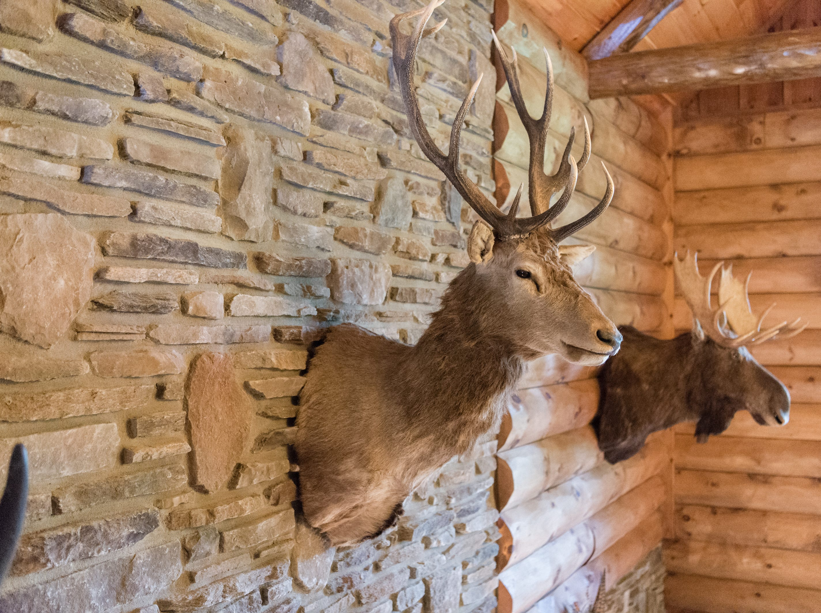 Wall-mounted animal heads in Dan and Belle Fangmeyer's log cabin in Waynesville.