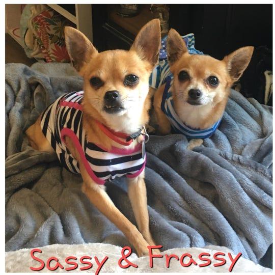 Sassy and Frassy