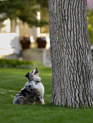 A dog waits out a squirrel on the 800 block of 5th Avenue North in this 2014 file photo.