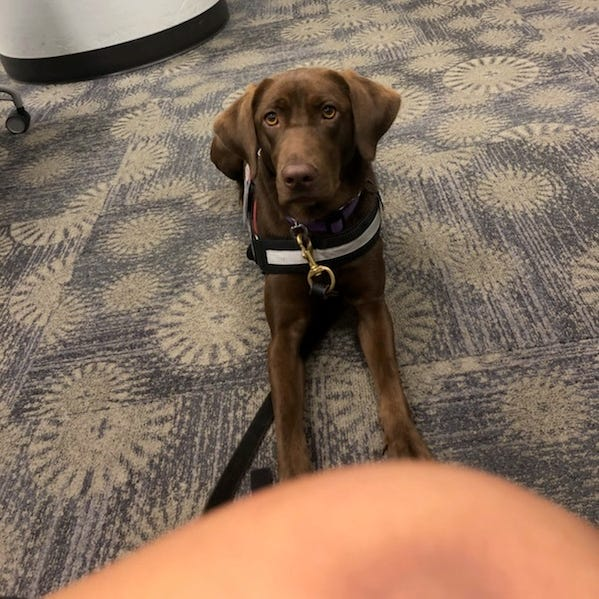 Ole Miss banned the service dog of a PTSD sufferer last week prompting the dog's trainer and service dog advocates to fight back.