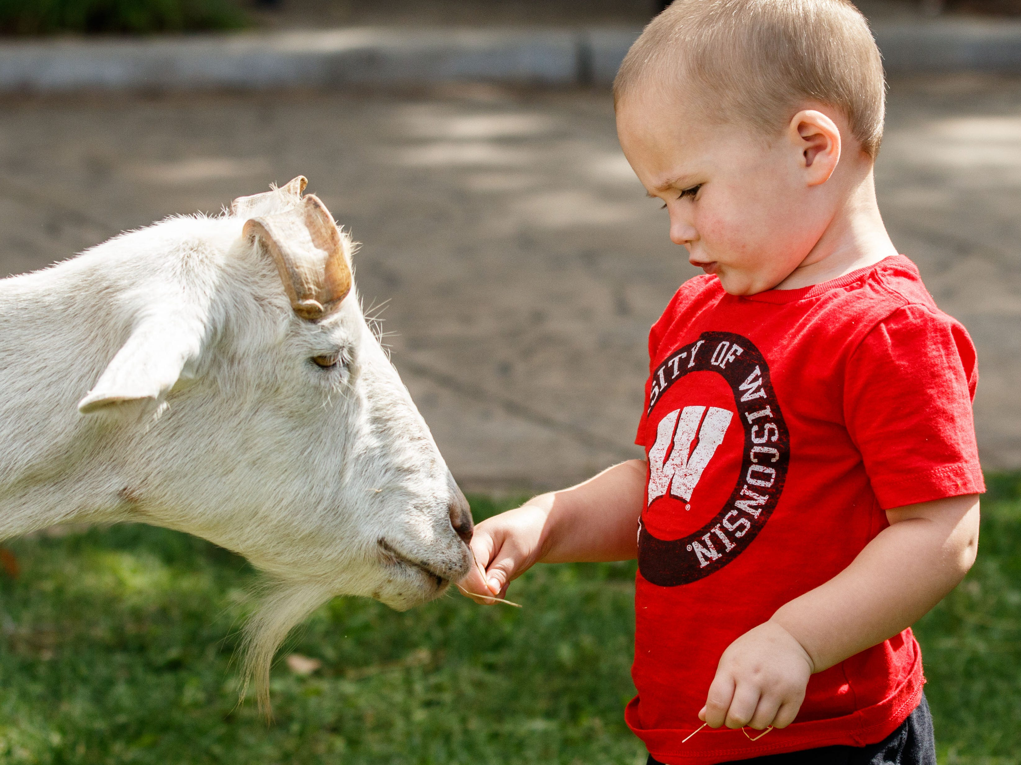 Three-year-old Carter Fox of Oconomowoc makes a new friend during the 7th annual Fall Festival hosted by the Downtown Oconomowoc Business Association on Saturday, Sept. 8, 2018. The event features live music, dancing, shopping, arts and crafts, food, refreshments and more.