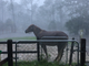 "Alena Sager shared this photo of her horse Katie during Hurricane Irma. Katie rode out the storm on the patio that Alena and her husband, Bob, converted into a stable. Alena writes: ""I rode out many hurricanes in Naples, having moved here in 1973.  No disrespect to Wilma, but she was like a tropical storm compared to Irma."""