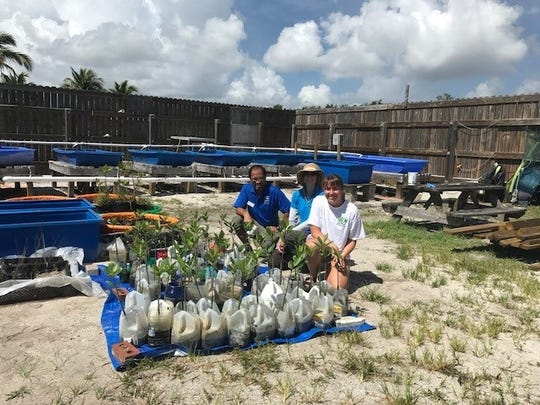 Florida Oceanographic Center received the rest of the mangroves for its oyster bed project.