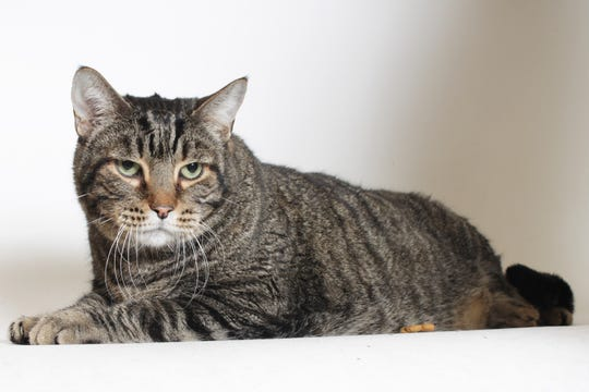 Tigger's big size is matched by his sweet heart.