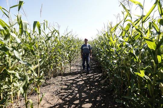Dave Meuer of Meuer Farm stands in his corn maze Tuesday. The corn maze season begins this weekend at the farm near Chilton and runs through Oct. 28.