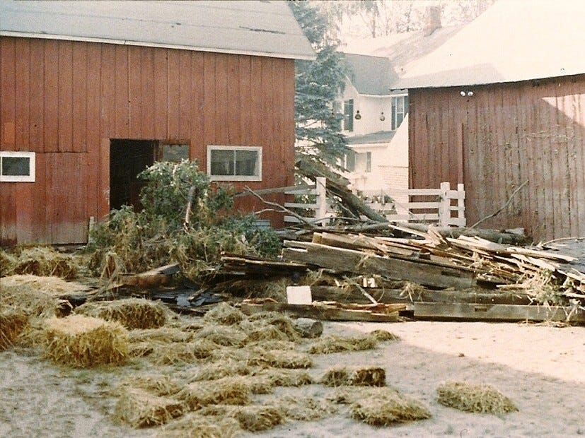 Debris in the barnyard at Wyldwyn Farm in Big Flats included trees and beams and roofing from someone else's barn that floated downstream and was caught in the barnyard. High water mark up is visible in the shaded part of the barn at right.