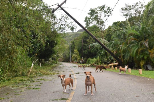 A power pole leans over a Merizo street in the aftermath of Typhoon Mangkhut on Sept. 11, 2018.