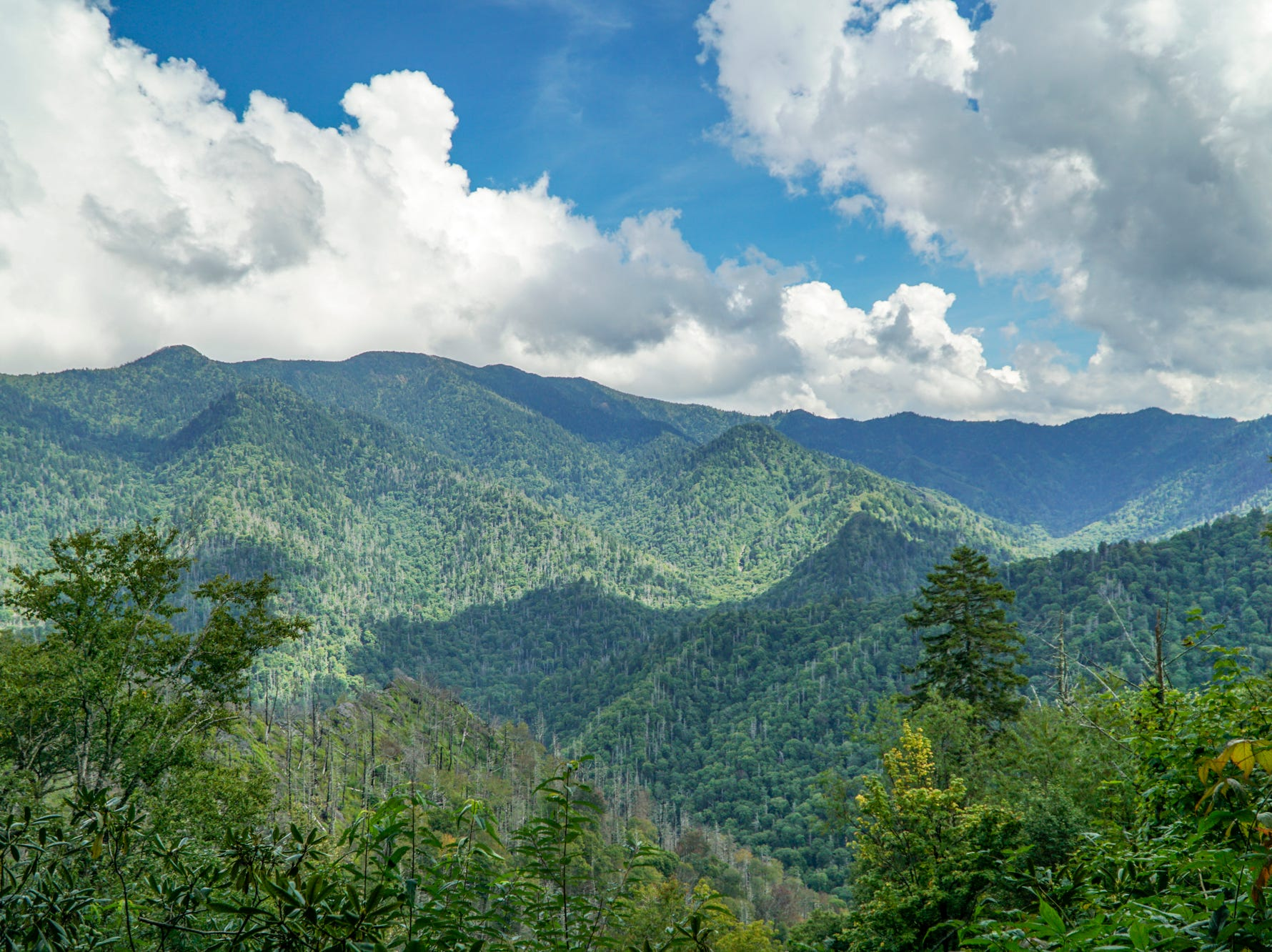 Mountain views from the new Chimney Tops trail viewing area could offer hikers a bevy of fall colors by mid-October.